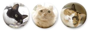 フェリシモ猫部のCMに登場した猫「ギズモ」「くぅ」「めめ」の缶バッジセット