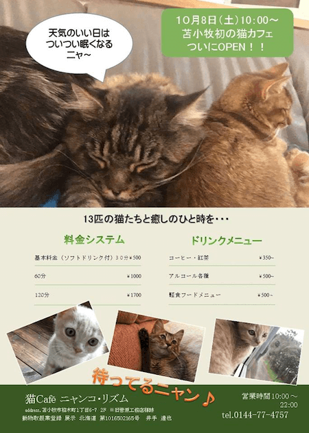 北海道の苫小牧に、初の猫カフェ「ニャンコ・リズム」がオープン