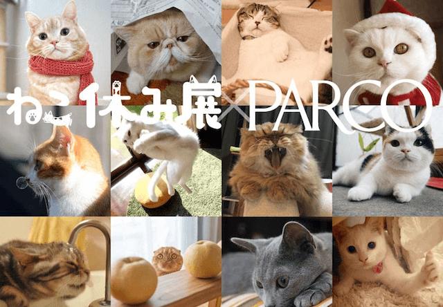 来場者10万人超えの猫イベント「ねこ休み展」パルコで開催