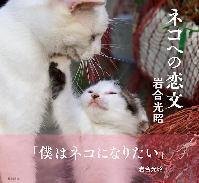 岩合光昭さんのフォトエッセイ「ネコへの恋文」