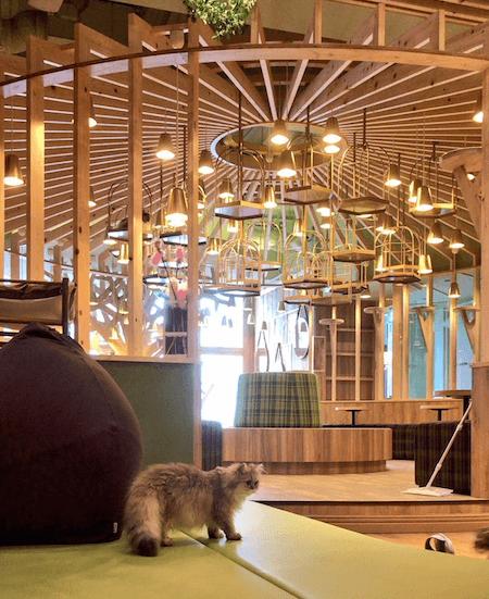 猫カフェMoCHA(モカ)秋葉原店の鳥かご