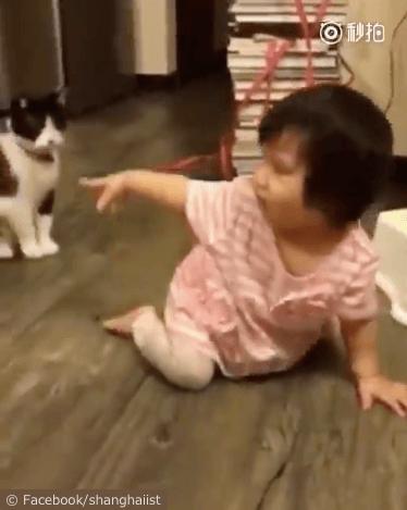 女の子を転ばせる猫の動画、猫を指差す女の子