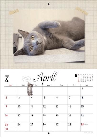 2017年スターねこカレンダーの写真2