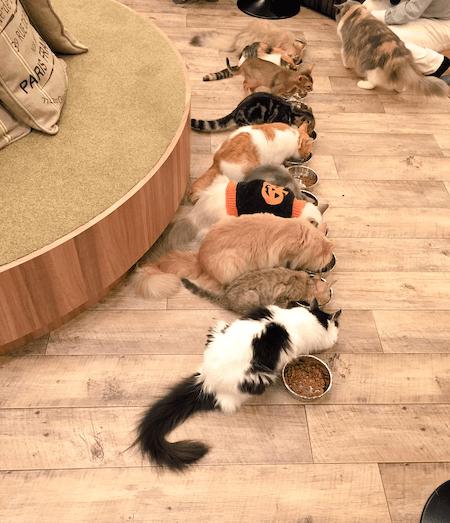 猫カフェMoCHA(モカ)秋葉原店のご飯タイム