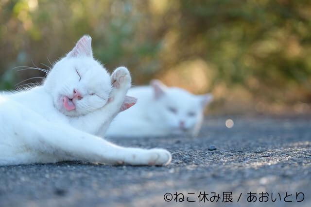 あおいとりのネコ写真
