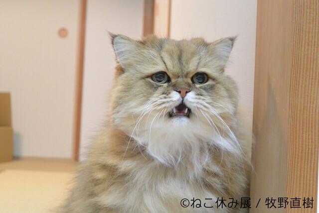 ふーちゃんのネコ写真