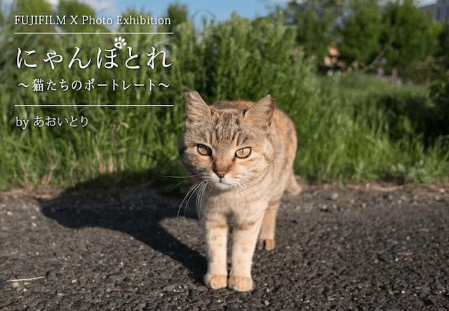写真家あおいとりの展示会「にゃんぽとれ ~猫たちのポートレート~」が原宿で開催