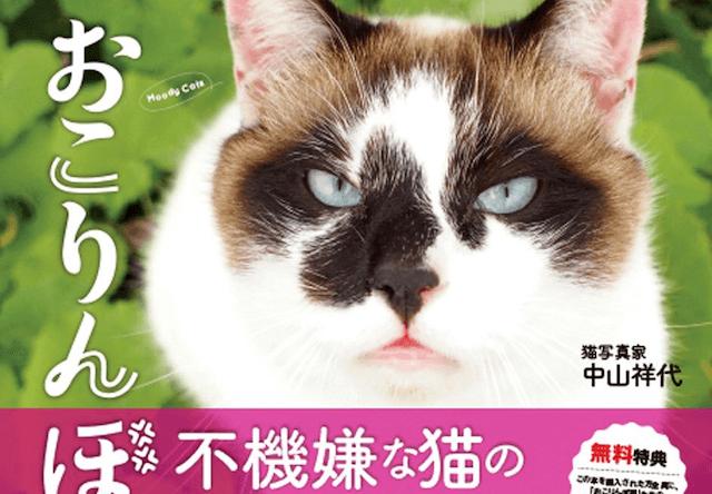 中山祥代さんの猫写真集、不機嫌な顔をした「おこりんぼ猫」