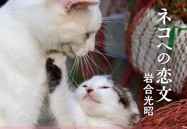 岩合光昭さんの最新作、「ネコへの恋文」が10/3に発売開始