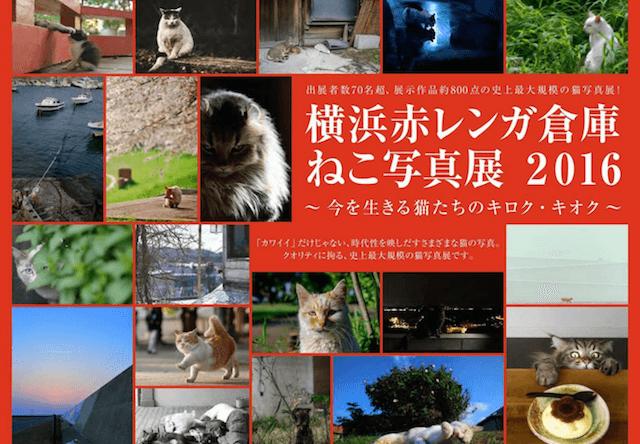 横浜赤レンガ倉庫で「ねこ写真展2016」が開催!11/2〜