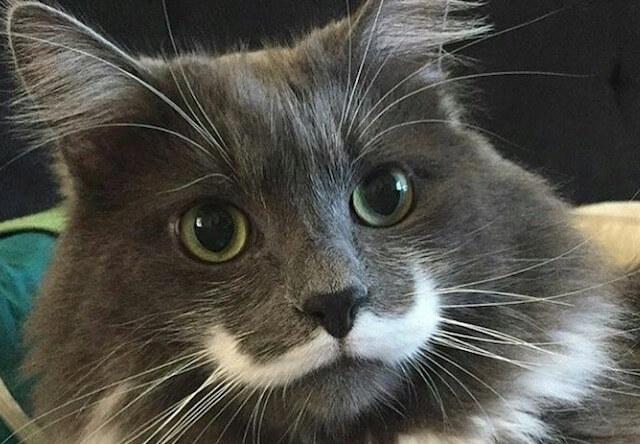ヒゲのような柄を持つダンディな猫、ハミルトン君が大人気