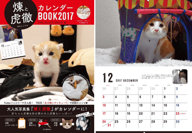 バンドマンと猫の成長記録、煉と虎徹のカレンダーBOOK2017