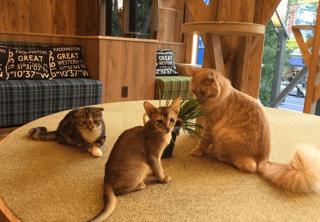 お洒落な猫カフェMoCHA、5店舗目となる秋葉原店がオープン!