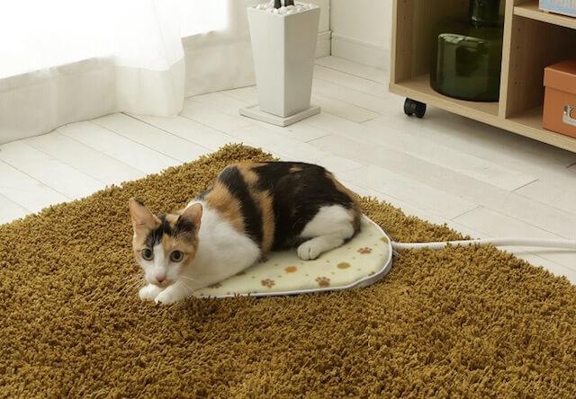 アイリスプラザ、猫の平熱と同じ温度のホットカーペット