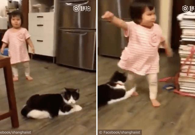 女の子の足に手を引っ掛けて転ばせる猫の動画が話題に