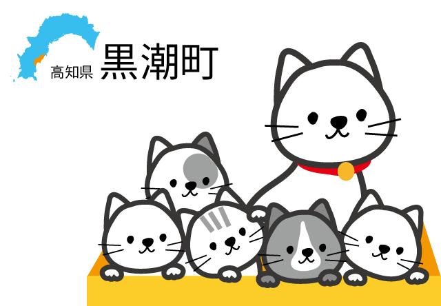 高知県の黒潮町、野良猫の不妊手術に補助金の交付受付を開始