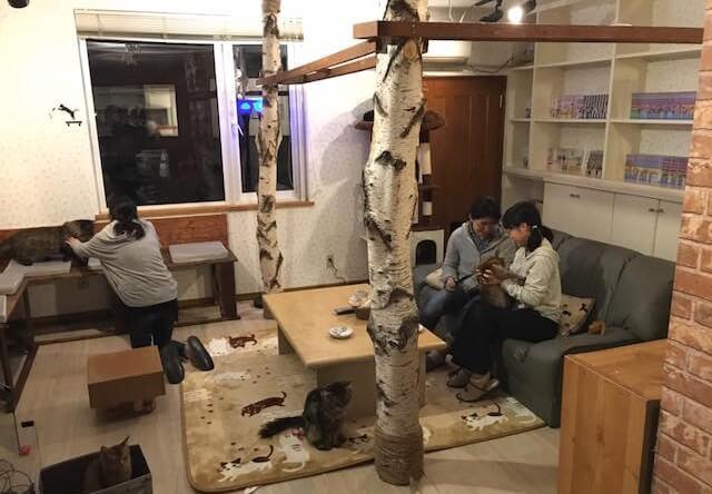 苫小牧の猫カフェ「ニャンコ・リズム」の店内