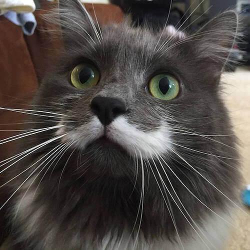 名探偵のような口ひげを持つ猫、ハミルトン