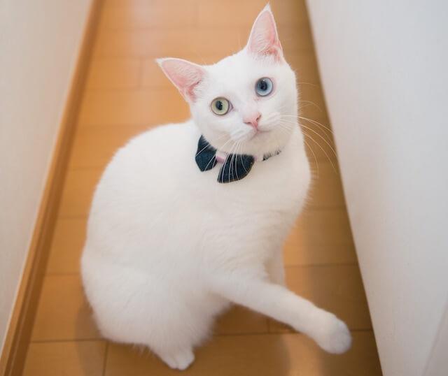 SNSで人気のアイドル猫の写真1