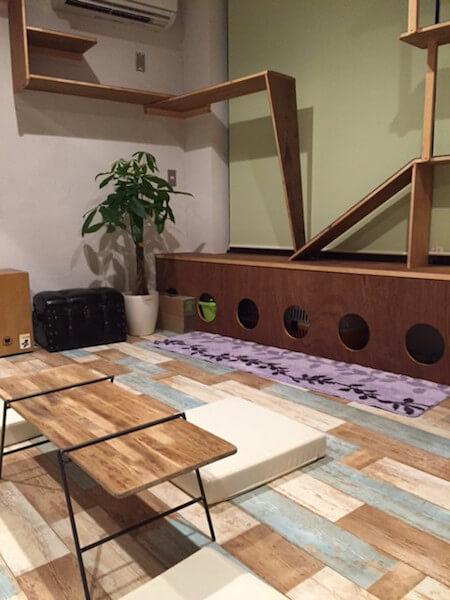 ゲストハウス「CATS INN TOKYO(キャッツイン東京)の猫カフェスペース