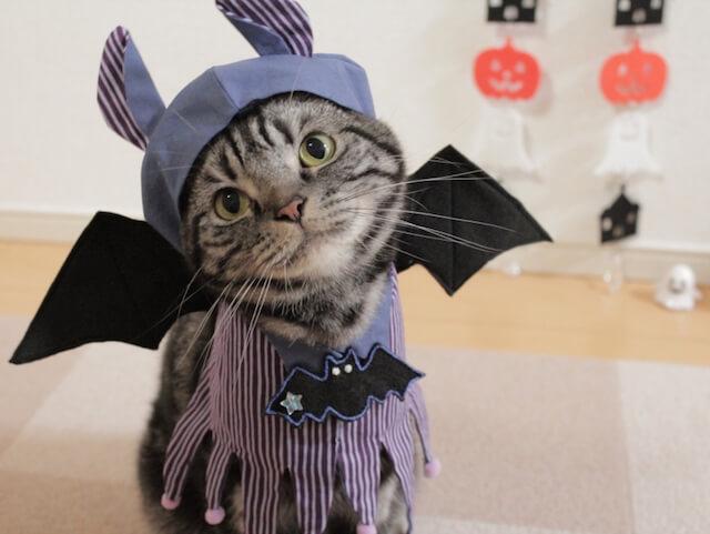 愛され上手フォトコン ハロウィン仮装した猫