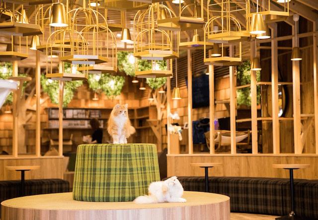 猫カフェMoCHA(モカ)秋葉原店の店内写真