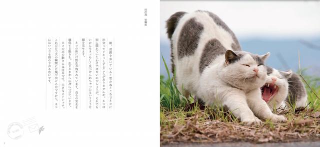 写真集「ネコへの恋文」のイメージ1