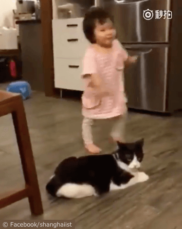 女の子を転ばせる猫の動画、走り出す女の子