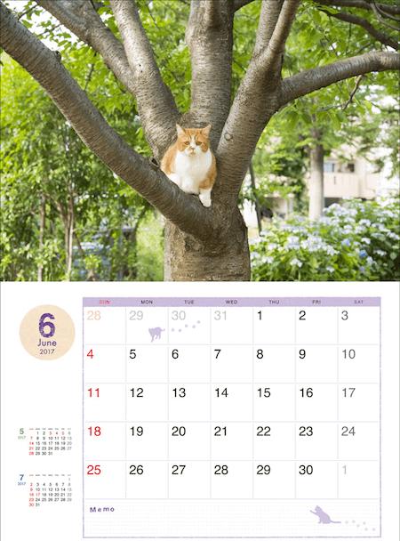 ふてネコ春馬の2017年カレンダー写真2