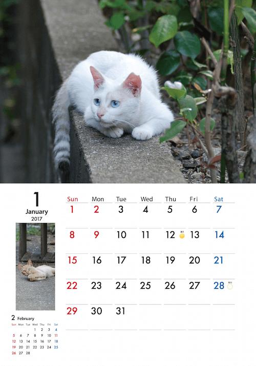 地域猫カレンダー2017「吾輩は地域猫である」のイメージ