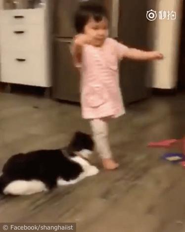 女の子を転ばせる猫の動画、女の子に気づく猫