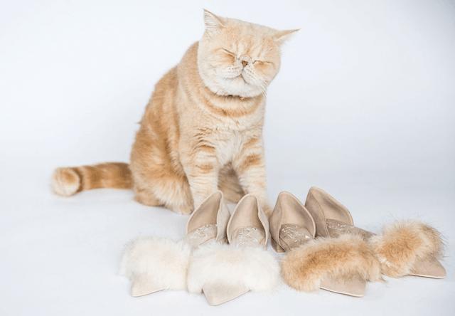 人気猫マッシュとコラボしたファーパンプス(Fur pumps)