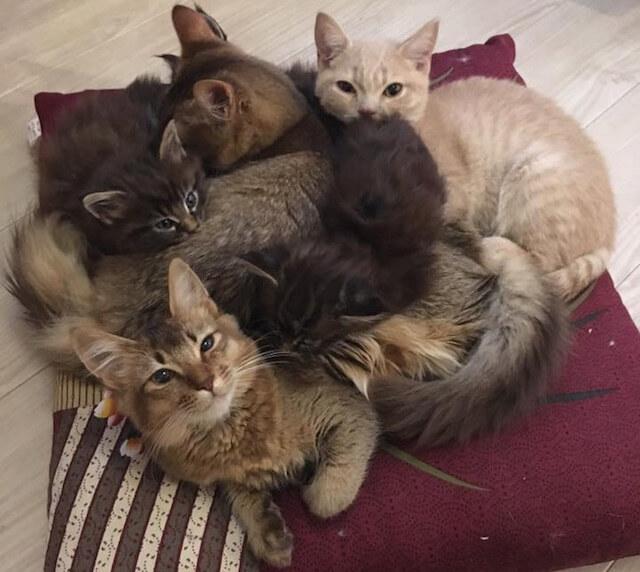 苫小牧の猫カフェ「ニャンコ・リズム」の猫団子