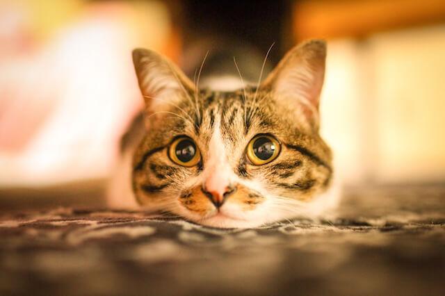 SNSで人気のアイドル猫の写真3