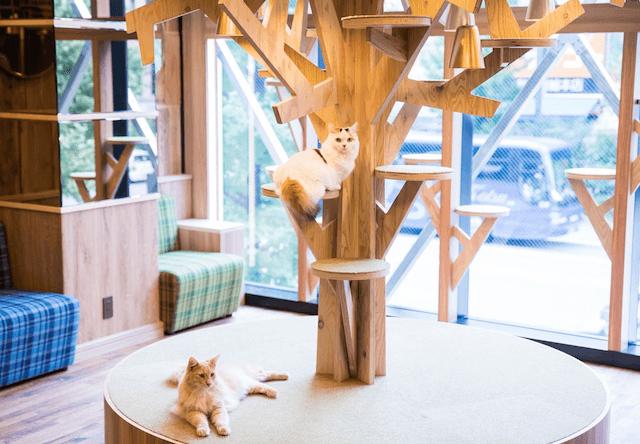 猫カフェMoCHA(モカ)秋葉原店のキャットタワー