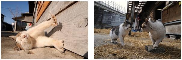 船橋市民ギャラリー「楽しくなさそうにはしていない猫」展示作品イメージ