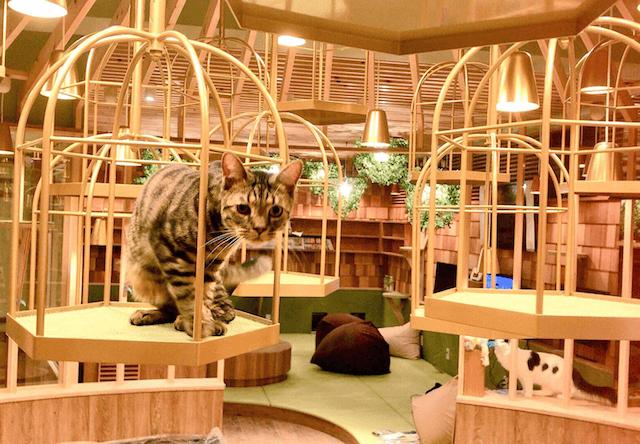 猫カフェMoCHA(モカ)秋葉原店には鳥かごを多数設置
