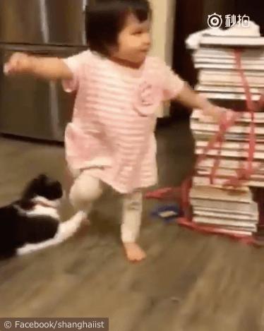 女の子を転ばせる猫の動画、女の子の足から手を離さない猫