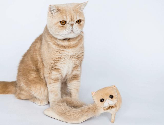 人気猫マッシュとコラボしたセパレートファーパンプス(Separate fur pumps)