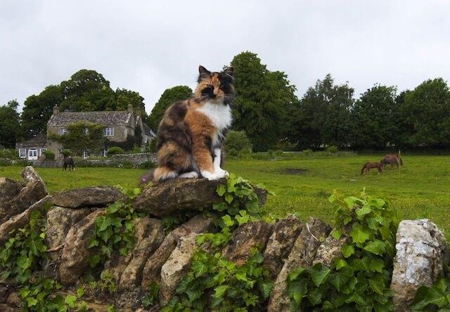 岩合さんがイングランドの田舎町で会った猫