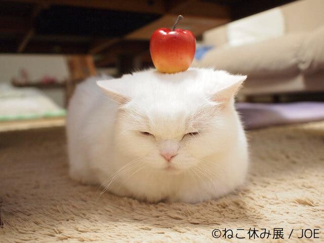 美人な白猫のうらちゃん