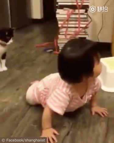 女の子を転ばせる猫の動画、一瞬戸惑う女の子