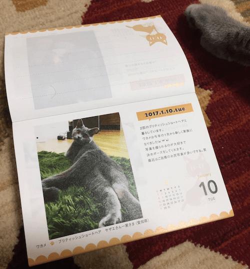 まいにちにゃんこ2017に選ばれた猫写真