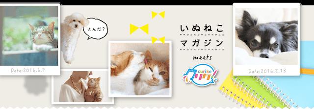 愛猫の写真でiPhoneケースを作れる、いぬねこクリケ