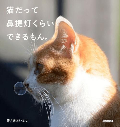 あおいとりの写真集、猫だって鼻提灯くらいできるもん。