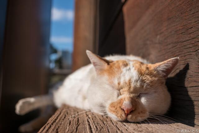 写真集「気ままに猫だもん。」に登場する気ままなネコ