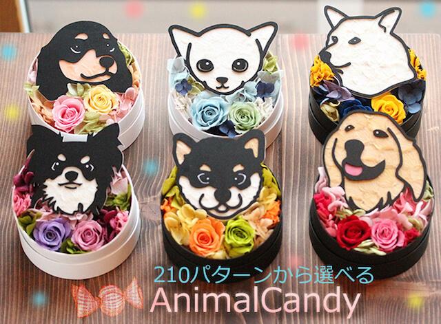 動物の顔と花の色で、210パターンから選べるプリザーブドフラワー「Animal Candy」