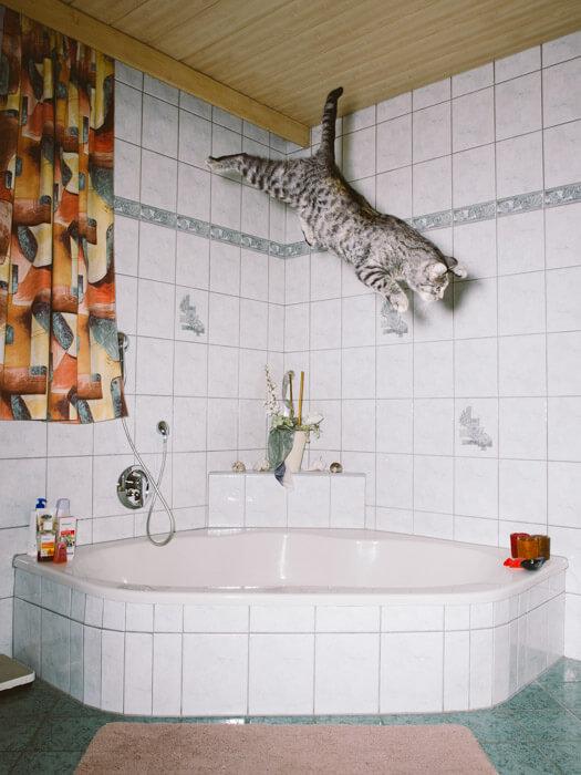 Daniel Gebhart de Koekkoek撮影、風呂場で三角飛びをする?猫