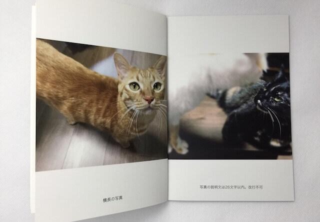 「TOLOT」のスマホアプリで愛猫のフォトブックを作ってみた