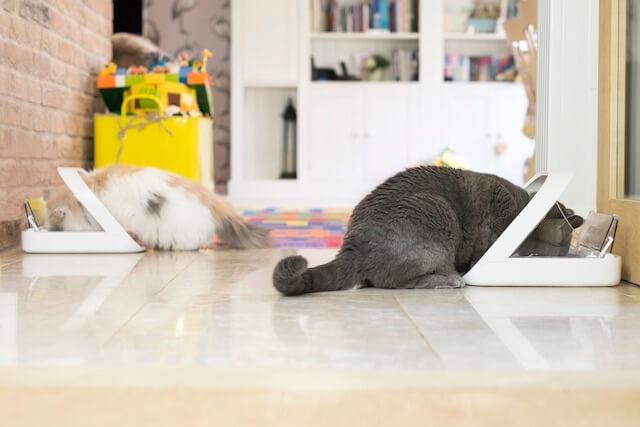 猫の多頭飼いしていても、複数台あれば別々の食事を与えることが可能